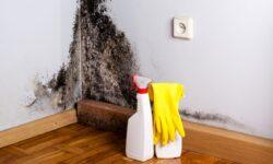 Как бороться с плесенью в квартире