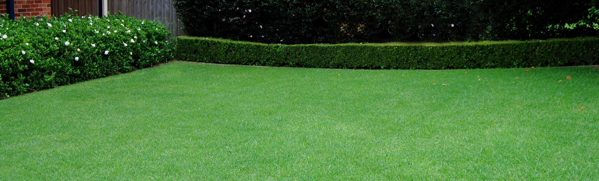 Как создать красивый газон на приусадебном участке?